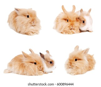 set of several cute small rabbits isolated on white background