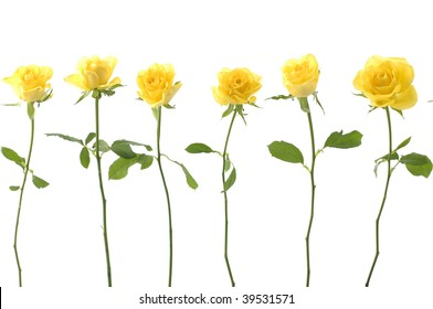 Long stem roses images stock photos vectors shutterstock set of sex long stem yellow rose mightylinksfo
