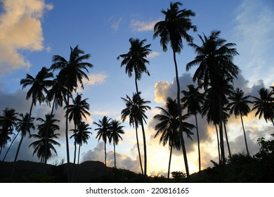 Set of silhouettes of palm trees on a hill at sunset on the island of Mahe Seychelles