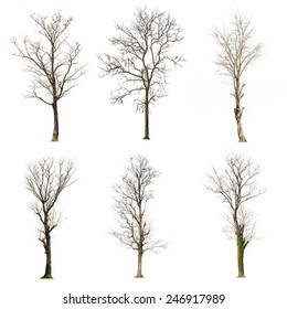 set of six Dead tree isolated on white background