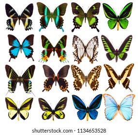 Set of sixteen various beautiful tropical butterflies isolated on white