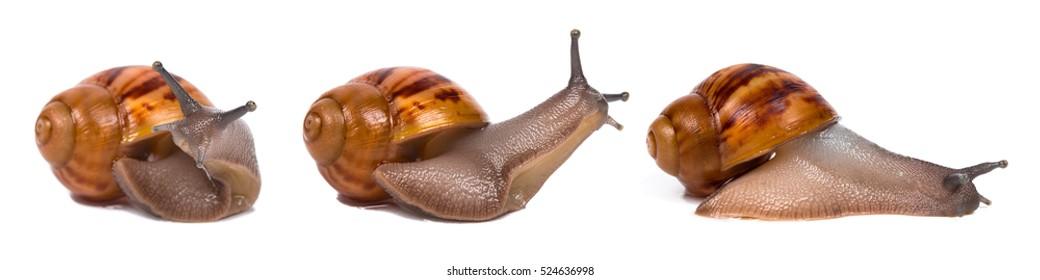 Set Of Snails Isolated On White