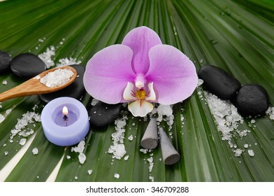 Set of spa and green palm