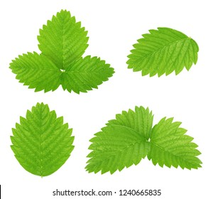 Set of strawberry leaves isolated on a white.