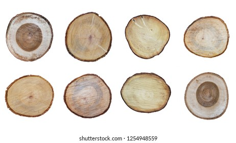 set of stump of tree isolated on white background included clipping path, top view