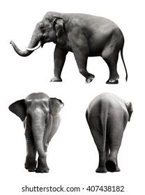 Set of sumatran elephant image isolated over white background