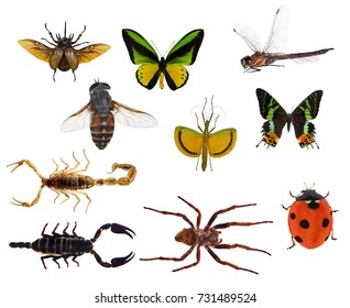 set of ten insects isolated on white background