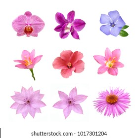 set of tender pink flowers isolated