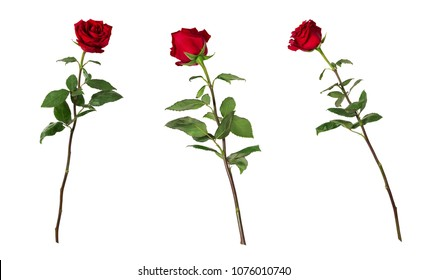 Set of three beautiful vivid red roses on long stems with green leaves isolated on white background. One flower shot at different angles, includung side and back view.