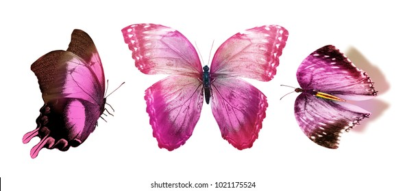 Set with three butterflies, isolated on white