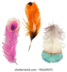 set with three colorful exotic feathers