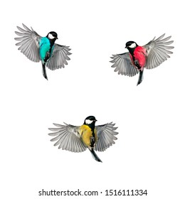 set of three multi-colored bird Tits with large wings fly on white isolated background