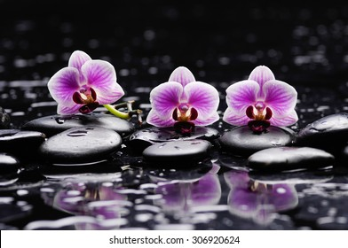 Set of three orchid with therapy stones
