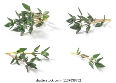 Set of Thyme fresh herbs (Thymus vulgaris) shrub. Fine herb. Isolated on a white background.