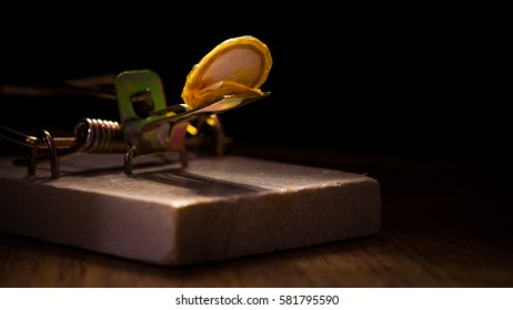 Set timber mouse trap with pumpkin seed against black background
