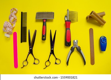 The set of tools for pet grooming. Brushes, special professional combs, furminator, claw files and tweezers, scissors, clicker, tape measure and delicacy for dogs and cats. Concept of pets hair care.