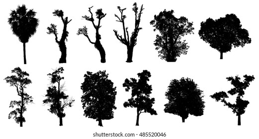 set tree silhouette with clipping path