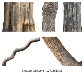 Set of tree trunk isolated on white background.