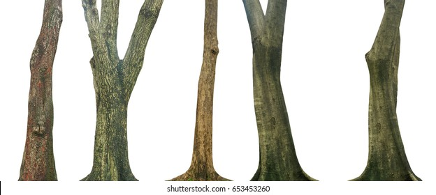 Set of tree trunk isolated on white background