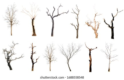 set of trees without leaves isolated on white background.Clipping Path