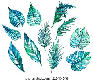 set of tropical and exotic leaves illustrations in watercolor and ink outline. isolated on white.