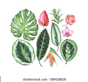 Set of tropical flowers and leaves. Watercolor hand drawn illustration.