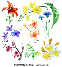 Set of tropical flowers and leaves. Watercolor painting.