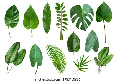 Set of Tropical leaves isolated on white background. Beautiful    tropical exotic foliage - Shutterstock ID 1938430966