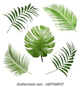 Tropical Leaves On White Background Images Stock Photos Vectors Shutterstock Download a free preview or high quality adobe illustrator ai, eps, pdf and high resolution jpeg versions. https www shutterstock com image photo set tropical leaves on white background 1687968937