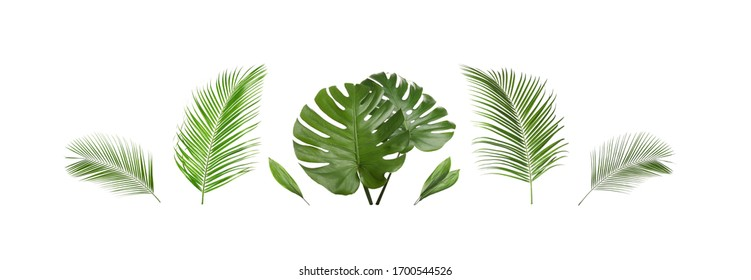 Set of tropical leaves on white background. Banner design