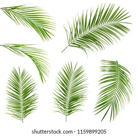 Set with tropical Sago palm leaves on white background