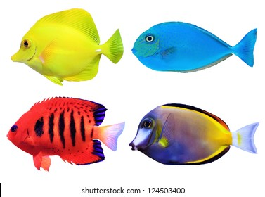 Set of tropical sea fish isolated on white background