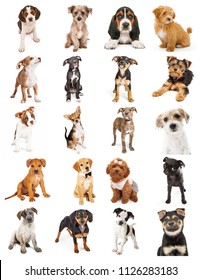 Set of twenty cute baby puppies isolated on white. Sized to print sheet on letter paper or for use on websites or social media.
