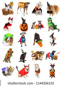 Set of twenty cute and funny pet photos with Halloween costumes and props. Isolated on white.