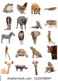 Set of twenty different zoo animals on white. Sized to print on letter paper or for use on websites or social media.