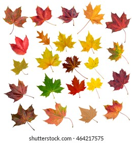 Set of twenty-three isolated autumn leaves