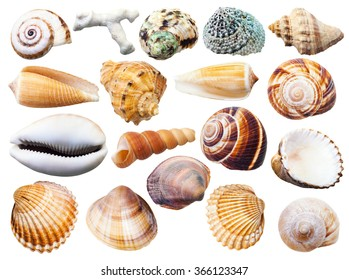 set of various mollusk shells isolated on white background - Shutterstock ID 366123347