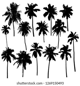 Set of vector silhouettes of palm trees isolated on white background