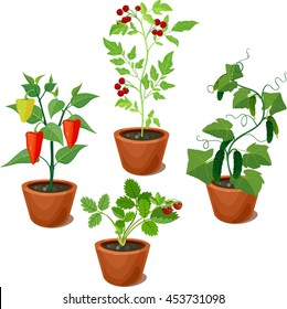 set of vegetable crops in flowerpots
