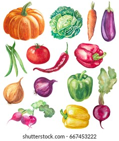 set of vegetables isolated on white. watercolor hand drawn illustration of peppers, pumpkin, onions, radish, beet, tomato, cabbage, eggplant and beans
