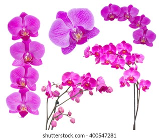 set of violet  flowers of orchid isolated on white background
