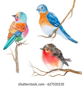 set of watercolor birds on white