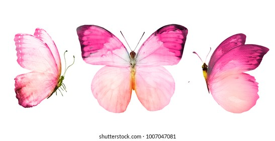 Set with watercolor butterflies , isolated on white