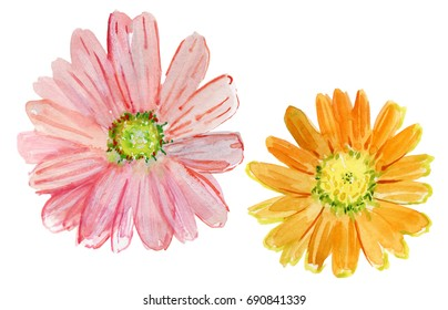 Set of watercolor drawing herbs and flowers, flowers collection for different design over white. Set of watercolor chrysanthemum and leaves