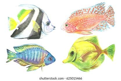 A set of watercolor fish. Tropical aquarium fish. Handmade Illustration