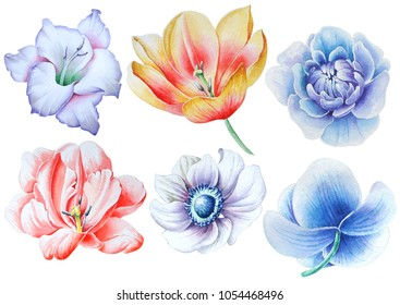 Set with watercolor flowers. Gladiolus. Tulip. Rose. Peony. Anemone. Orchid. Hand drawn.