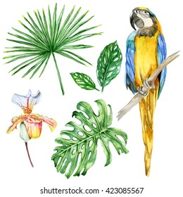 Set of watercolor hand painted elements: Macaw Parrot, Orchid flower, exotic leaves, palm, monstera isolated on white background