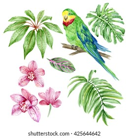 Set of watercolor hand painted elements: green parrot, exotic leaves and orchids, palm, monstera, tropical foliage. Isolated on white background. Botanical illustration.