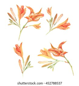 Set of watercolor orange lily flowers .Watercolor hand painted illustration isolated on white background.