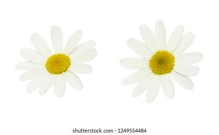 Fleur Marguerite Stock Photos Images Photography Shutterstock